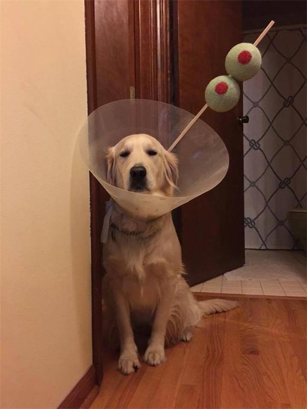 """Bị đeo cái nón nhựa ấy là đã thấy đời không tươi sáng rồi, ai ngờ """"con sen"""" nó còn """"lầy lội"""" biến mình thành ly martini chứ. (Ảnh: Internet)"""
