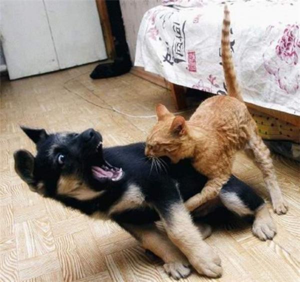 cún cưng