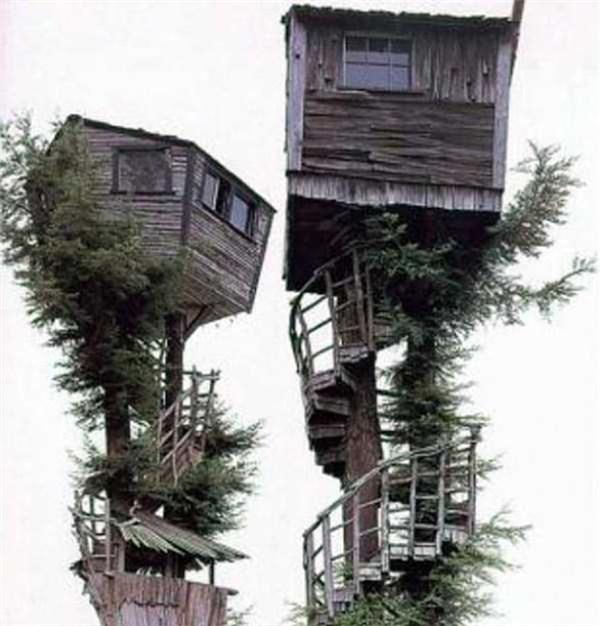 Nhà cây cũng phải có đôi cơ.