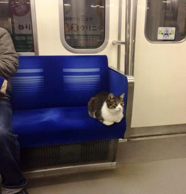 """Hệ thống tàu điện ngầm chẳng gây một tẹo rắc rối nào cho chú mèo thông minh thích """"ngao du thiên hạ"""" này cả.(Ảnh: manpukuoya)"""