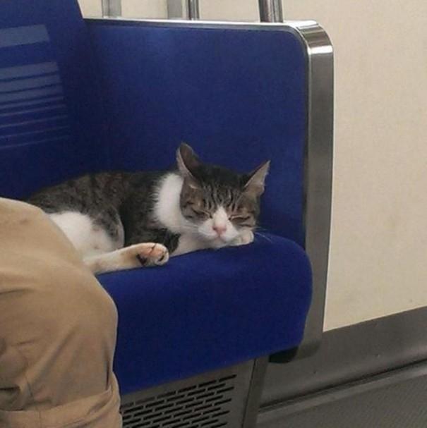 """Sau một ngày dài trải nghiệm khám phá khắp nơi, mèo ta đánh một giấc no say mà chẳng quan tâm sự đời đang """"soi mói"""" gì về mình.(Ảnh: hmmtkntr)"""