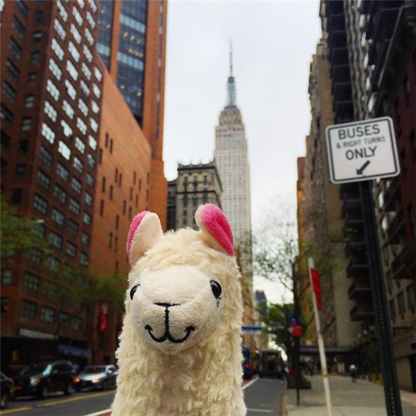 Thời tiết ở New York không tài nào dễ thương bằng đôi tai hồng của mình đâu. (Ảnh: Eylul Savas)