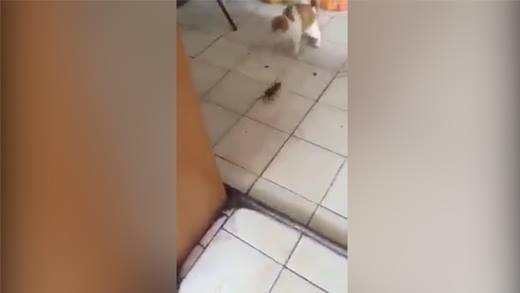 """Phát hờn với những chú mèo sợ chuột """"như cáy"""""""