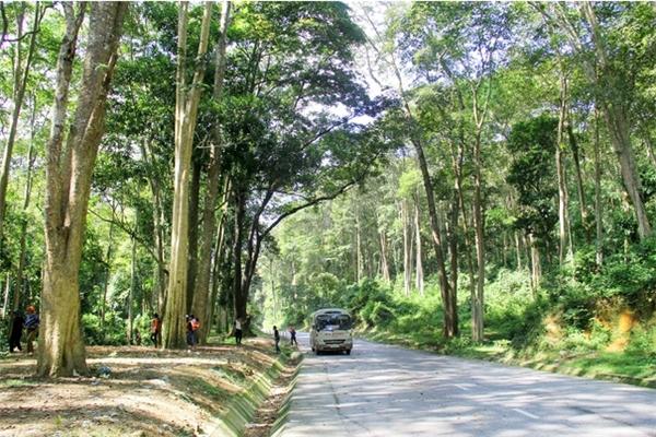 Du lịch Nghệ An - Khung cảnh cực tây tại rừng săng lẻ ở Nghệ An