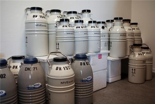 Tinh trùng được đựng trong bình bằng kim loại chứa nitơ lỏng với nhiệt độ -196 độ C. Những chiếc bình được dán nhãn và niêm phong cẩn thận trước khi chuyển đi.