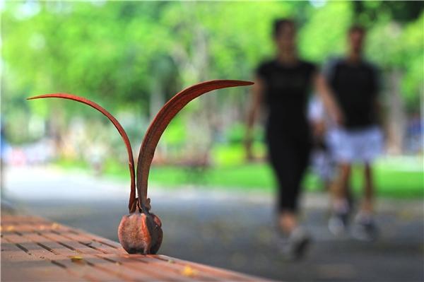 Du lịch Sài Gòn - Sài Gòn lãng mạn mùa trái dầu bay