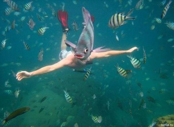 Người cá ngoài đời thật sao lại khác trong truyền thuyết đến thế này? (Ảnh: Internet)