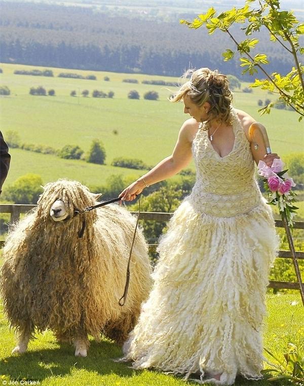 Cô dâu này quyết định dùng len của bầy cừu do chính tay mình nuôi làm váy cưới.