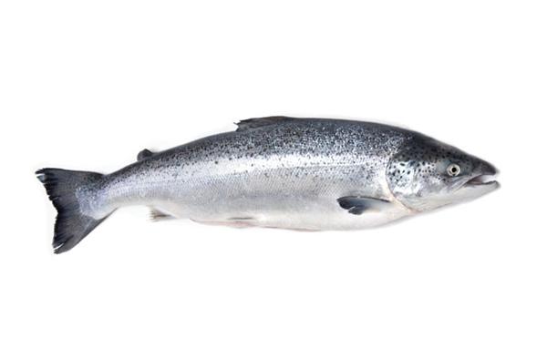 Chỉ là con cá hồi thôi mà, sao lại kỳ thị em nó thế? (Ảnh: Internet)