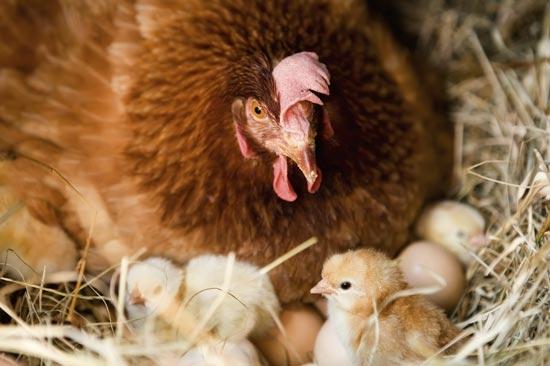 Có lẽ không ai đốt vỏ trứng đâu nhưng bạn cũng nên cẩn thận đừng để chúng rơi vào lửa. (Ảnh: Internet)