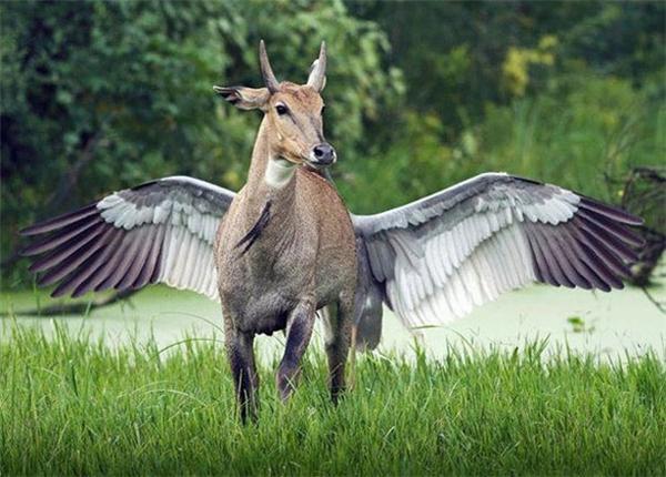 Hóa ra ngựa có cánh là có thật.
