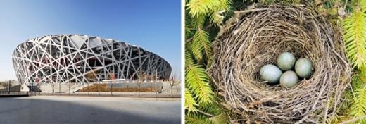 Sân vận động Tổ chim của Trung Quốc.
