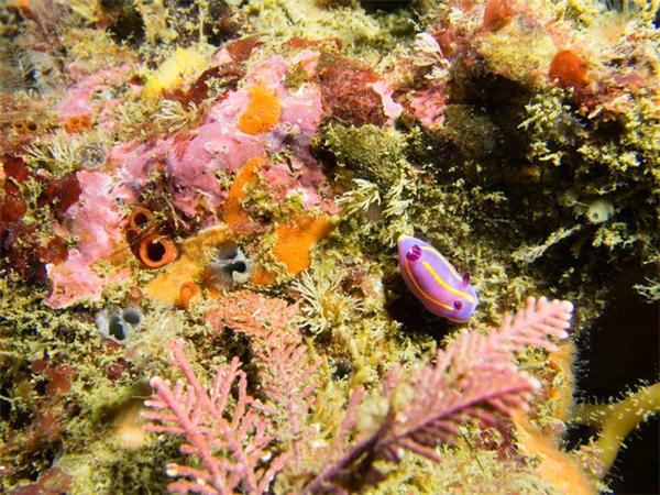 Trên thế giới hiện có khoảng 3.000 loài sên biển khác nhau.