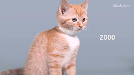 100 năm công nghệ làm đẹp cho mèo - ngày càng sang chảnh