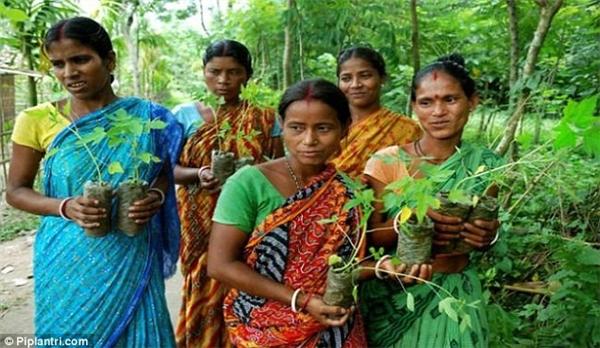 Dân làng phải đảm bảo chăm sóc cây, không để chúng chết.