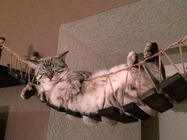 """Nếu bạn đang sở hữu một em mèo """"chảnh chọe"""" trong nhà, tại sao không sắm cho em ấy một chiếc cầu thang treo nhỉ? Vừa có thể thong dong đi lại mà em mèo còn có thể thỏa thê nằm ngủ mà chẳng lo vướng đường của ai. (Ảnh: Internet)"""