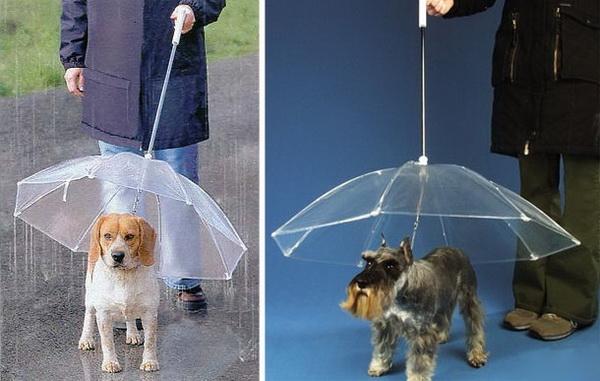 """Sài Gòn đang vào mùa mưa? Bạn đừng lo khi phải đưa em cún của mình ra ngoài đường vì giờ đã có dạng ô lộn ngược dành cho thú cưng. Chỉ mất khoảng 50.000 đồng là bạn đã sở hữu cho vật nuôi của mình chiếc ô """"sành điệu"""" này rồi. (Ảnh: Internet)"""