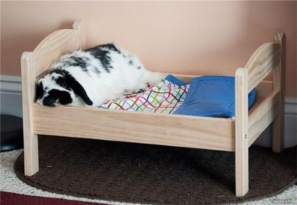 """Không chỉ còn là những chiếc ổ ngủ đơn giản, giờ đây thú cưng của bạn cũng có thể sở hữu những chiếc giường đẹp không thua gì """"công chúa, hoàng tử"""" đâu nhé. Giá cho mỗi chiếc giường cũng đa dạng không kém, thường giao động từ 300.000 cho tới hàng triệu đồng.(Ảnh: Internet)"""