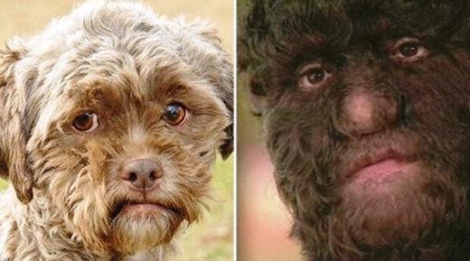 Một số người cho rằngJinmenken thực ralà một loài khỉ mặt giống người.(Ảnh: Internet)