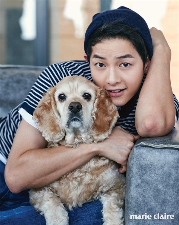 Trên tạp chí Marie Claire, Song Joong Ki phối hợp với bạn diễn là chú cún vàng đáng yêu.