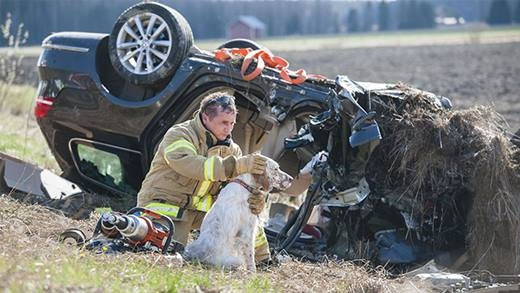 Những khoảnh khắc cảm động giữa nhân viên cứu hộ và động vật