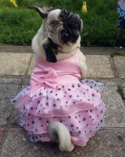 Đầm công chúa mẹ may cho em đấy.
