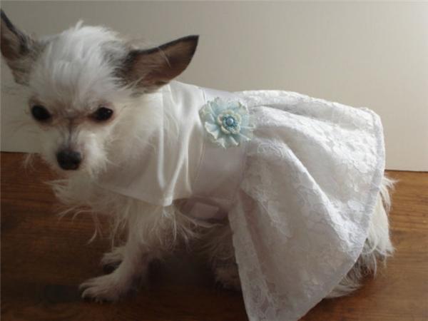 Em đẹp nhất trong bộ đầm trắng tinh khôi.