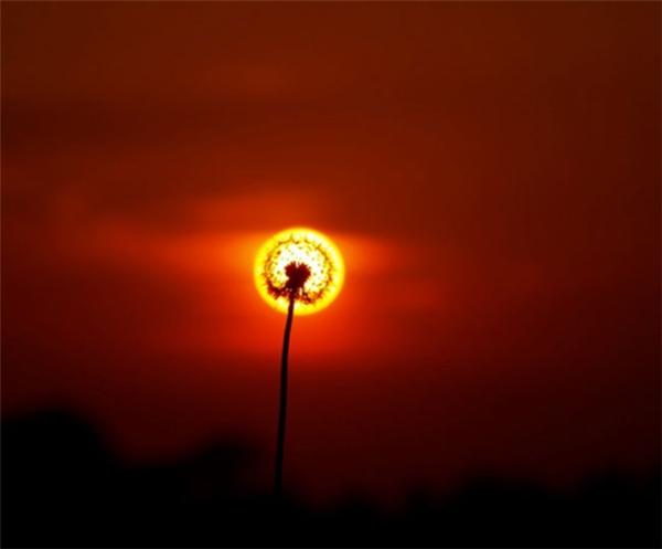 Hoa mặt trời, không phải ngày nào cũng được chiêm ngưỡng đâu.