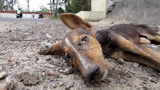 Tưởng như chú chó này không còn một chút hi vọng sống. (Ảnh: Internet)