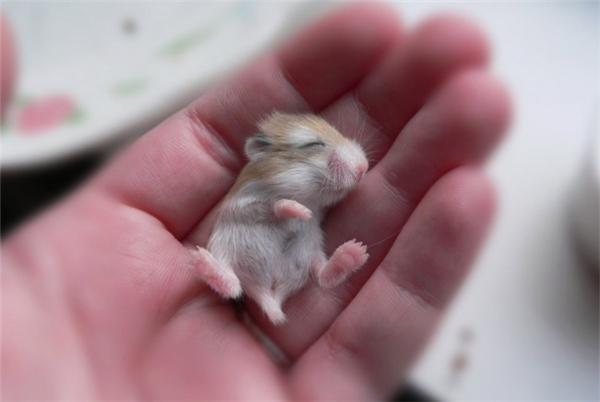 """Chú chuột lang """"bé bi"""" này sẽ khiến người khác phải... chống lại cả thế giới để bảo vệ em ấy mất."""