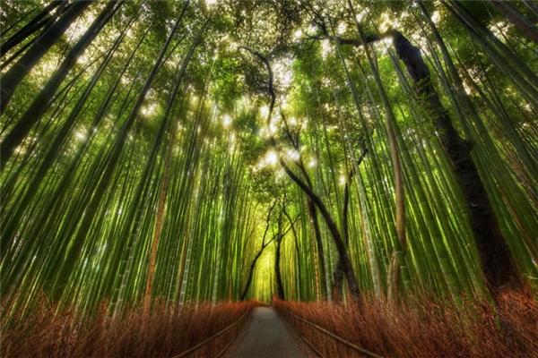 Chắc không cần giới thiệu gì nhiều hẳn ai ai cũng biết đến địa danh nổi tiếng này của Kyoto, Nhật Bản. Vẻ đẹp của từng hàng cây trúc cũng như không gian yên tĩnh như níu chân mọi du khách khi đến đây.