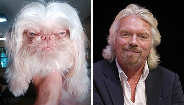 Chú chó này trông giống hệt ông trùm tư bản người Anh Richard Branson và đặc biệt là nó trông... không hề giống một con chó.