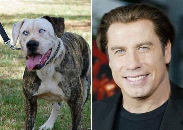 Đôi mắt quyến rũ của nam tài tử đào hoa nổi tiếng một thời John Travolta đã được chú chó này thừa hưởng trọn vẹn.