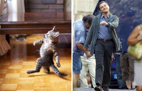 """Em mèo dễ thương này tái hiện dáng đi """"bá đạo"""" của Leonardo DiCaprio không khác một centimet nào."""