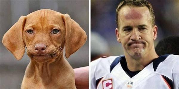 Cầu thủ Peyton Manning có một người hâm mộ quá sức trung thành.
