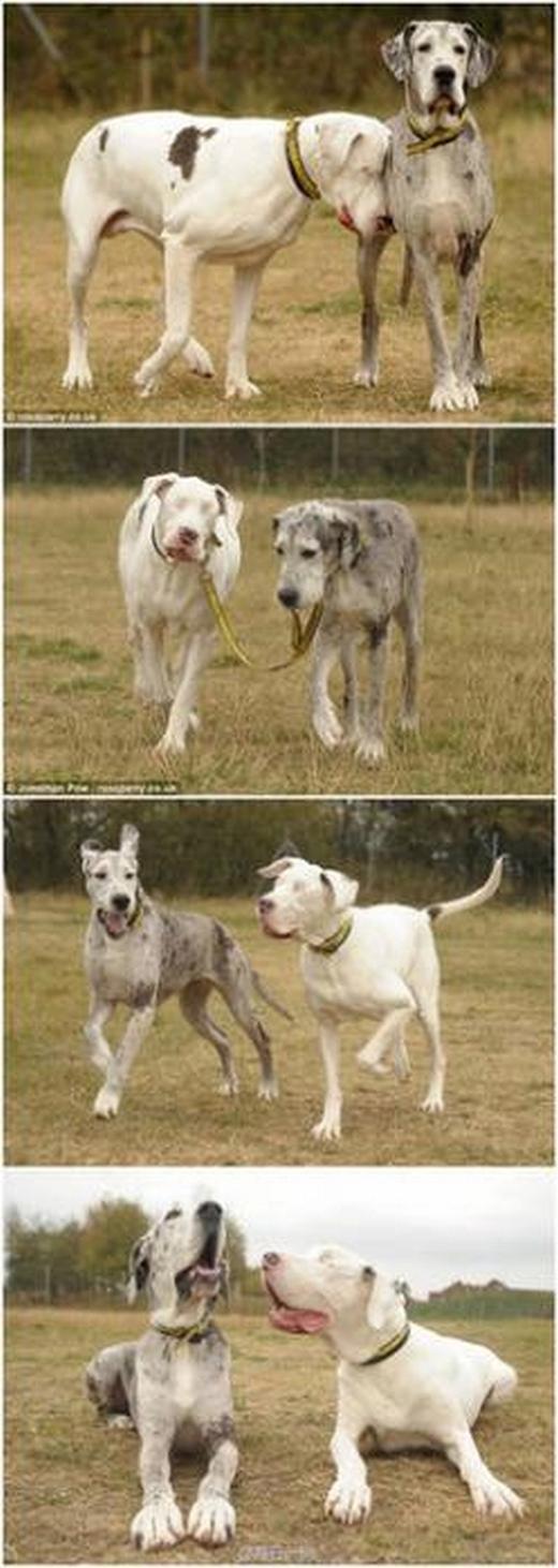 Hạnh phúc của chú chó mù là được chơi đùa cùng người bạn thân yêu. (Ảnh: Internet)