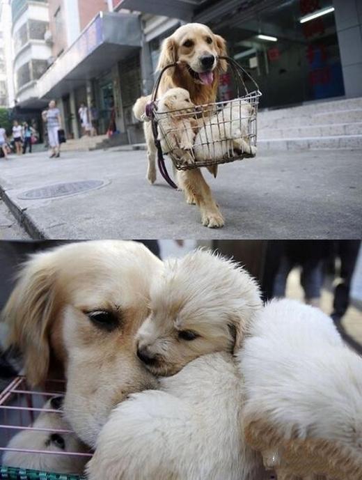 Đâu chỉ con người, cả động vật cũng có tình mẫu tử vô cùng quý giá. (Ảnh: Internet)