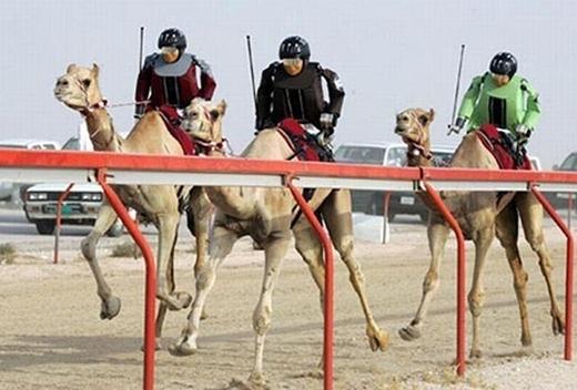Người cưỡi lạc đà xưa rồi, ở Dubai là robot cưỡi lạc đà. (Ảnh: Internet)