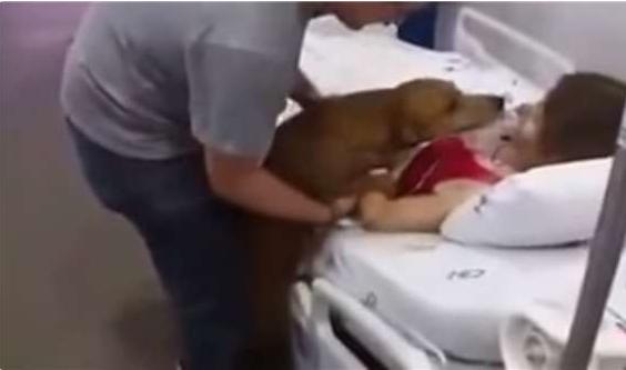 Cô xem chú cho như con trai mình vànhiều lần van xin bệnh viện cho chóđến thăm.