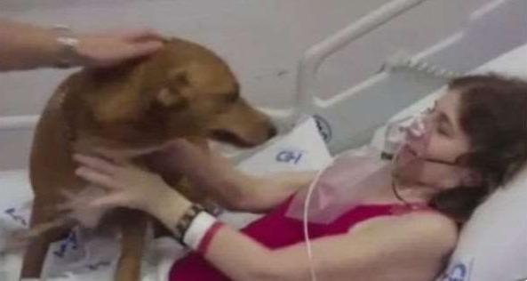 Xét đến tình trạng nguy kịch của bệnh nhân, bệnh viện đã đồng ý cho chó đến thăm cô