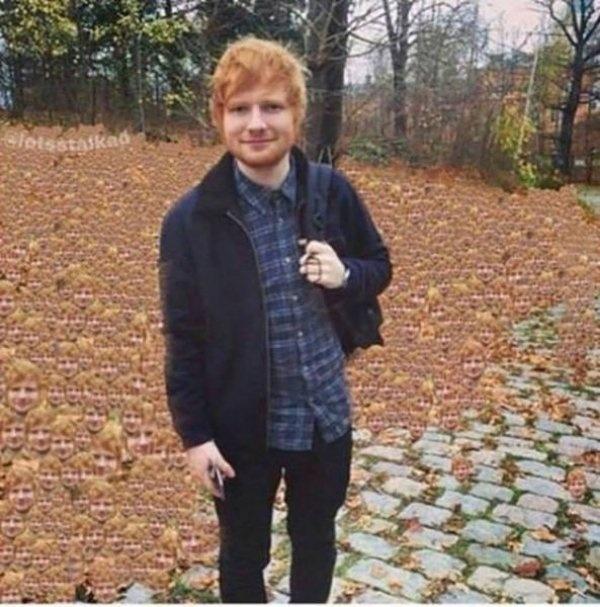 Một cánh đồng mọc toàn Ed Sheeran.