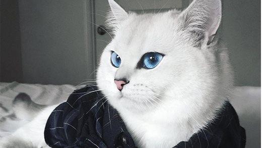 Lộ diện chú mèo có cặp mắt đẹp nhất thế giới