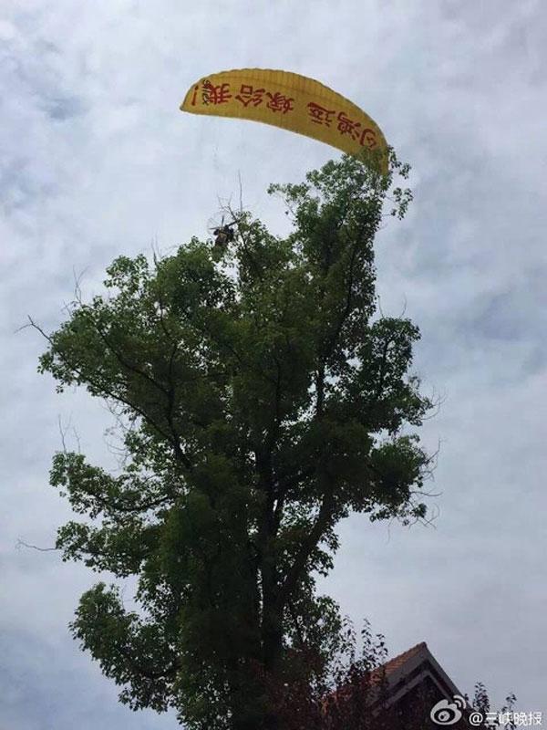 Chiếc dùbịgió mạnh đẩy đi và mắc vào một cây cao.