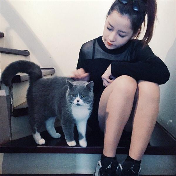 Thú cưng của Chi Pu thuộc giống mèo Anh, được nữ diễn viên đặt tên là Puxam. Puxam còn có hẳn một trang cá nhân trên mạng xã hội Instagram, được theo dõi bởi gần 20 nghìn fan hâm mộ. - Tin sao Viet - Tin tuc sao Viet - Scandal sao Viet - Tin tuc cua Sao - Tin cua Sao