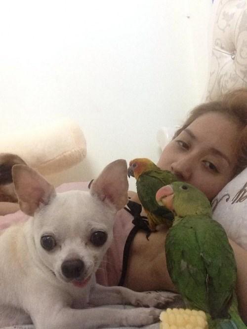 Khánh Thi luôn có một em Chihuahua và 2 con vẹt cưng bầu bạn. - Tin sao Viet - Tin tuc sao Viet - Scandal sao Viet - Tin tuc cua Sao - Tin cua Sao
