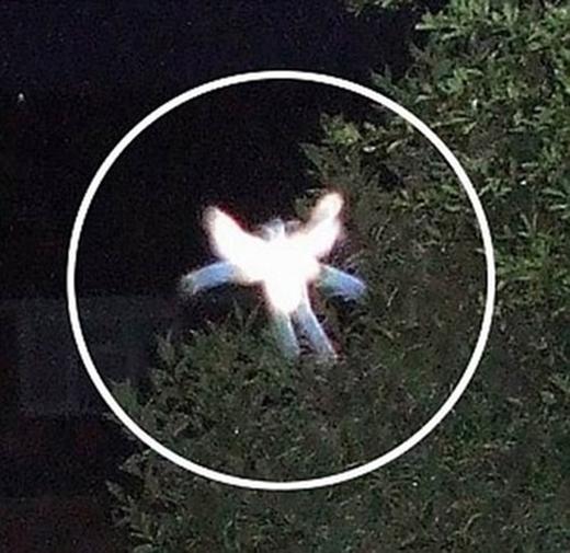 Bức ảnh thiên thần trong khu vườn của bàPhyllis.