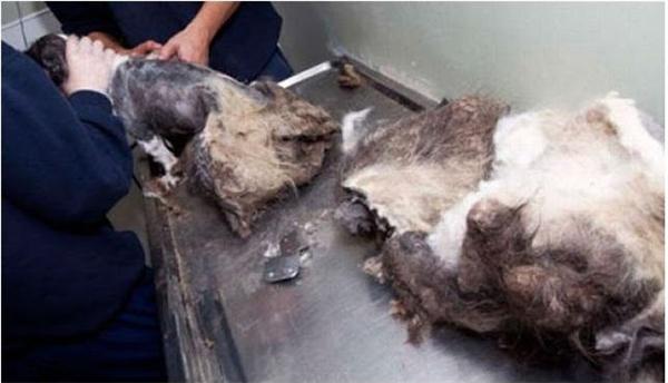 Màn lột xác của chú chó bị xem là