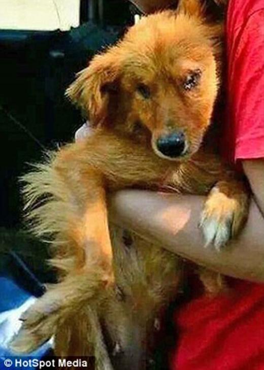 Ngay lập tức chú được Rescue Blind Dog UK giải cứu. (Ảnh: Internet)