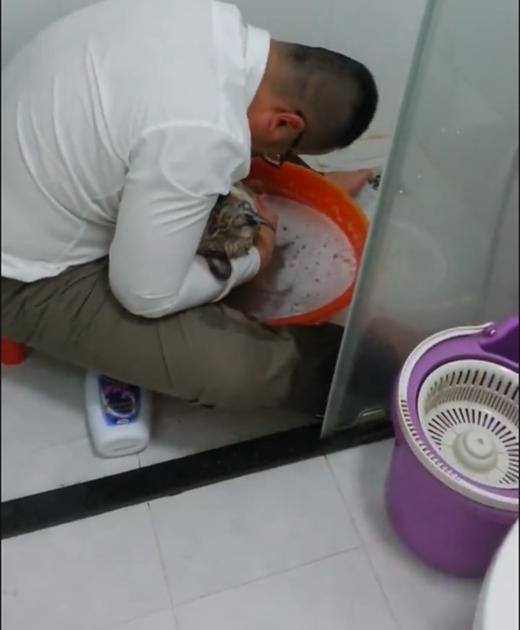 Xúc động khoảnh khắc người chủ tắm cho chú chó cưng đã chết
