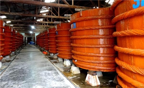 Nhà thùng là nơi cho ra đời những giọt nước mắm thơm ngon, vừa đi thăm nhà thùng vừa mang vài chai nước mắm chính hiệu về thì còn gì bằng. (Ảnh: Internet)